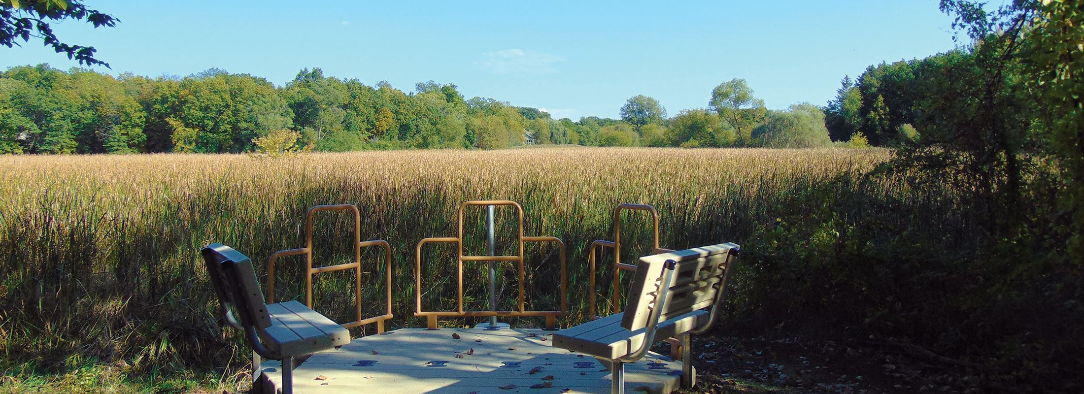 Overlook of Wetland at Brierwoods Park