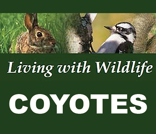 Living with Wildlife Coyotes